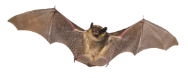 banner-bat