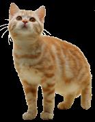 cat_PNG100
