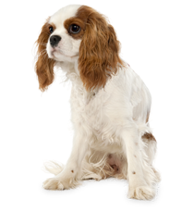 dog_PNG2433