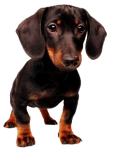 dog_png_by_amandada1-d4ke3ut