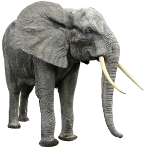 elephant_png_hq_by_gd08-d4w0069