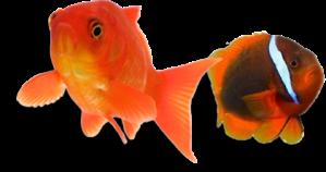 Fishtop