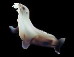 ocean-food-web-seal
