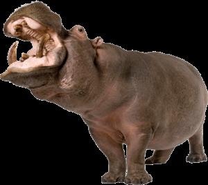 big_hippo