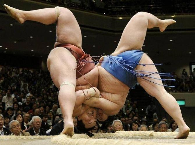 Funny-Sumo-Wrestling-Picture.jpg