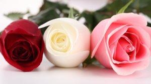 best_flowers_images