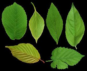leaf-03