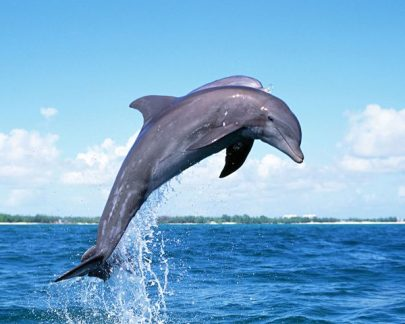 dolphins-jumping-06.jpg