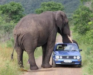 big-elephant.jpg